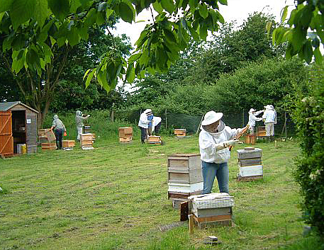 hampton_court_apiary_2
